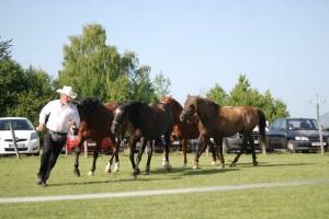 dressage-ballet-4-chevaux (1)