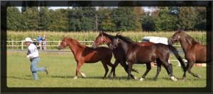 dressage-ballet-4-chevaux (2)