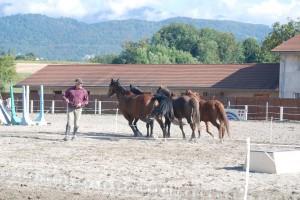 dressage-ballet-4-chevaux (3)