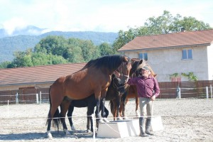 dressage-ballet-4-chevaux (4)