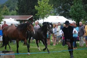 dressage-ballet-4-chevaux (5)