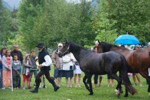 dressage-ballet-4-chevaux (6)