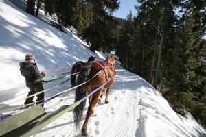ski-joering-5