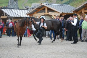 spectacle-longues-renes