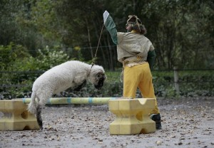 spectacle-mouton