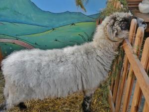 travail-de-la-laine-10